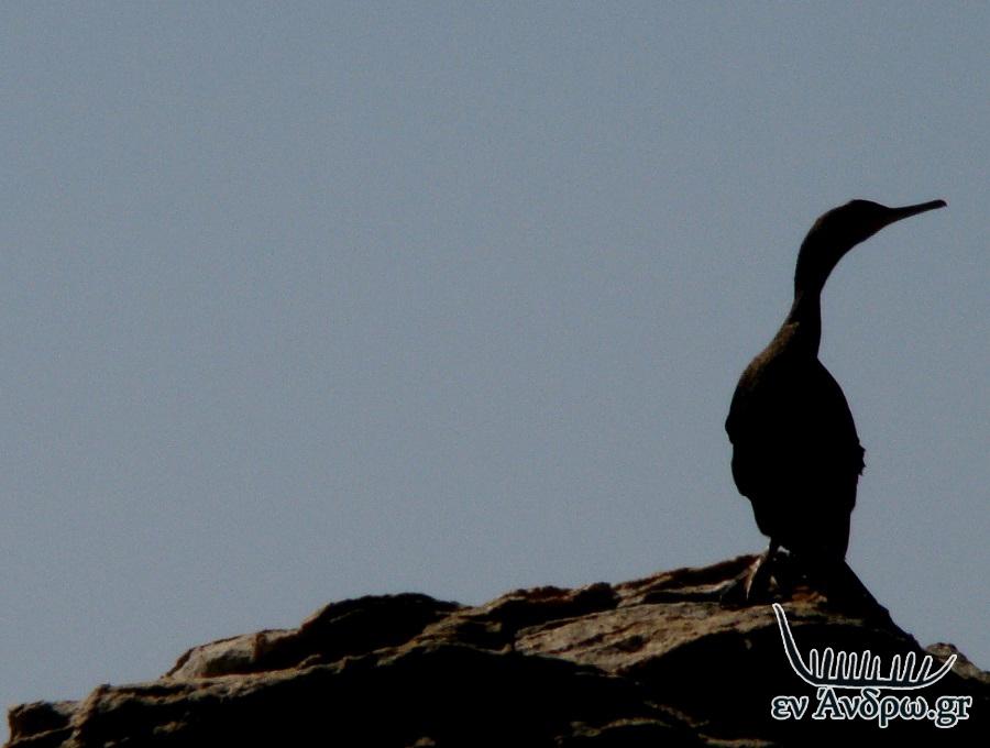 μεγάλο μαύρο πουλί σκατά βίντεο σπιτικό τρίο σεξ κανάλι
